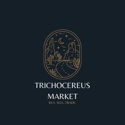 TrichocereusMarket